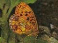 karahutohyoumon