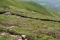 富良野岳山頂付近のエゾノツガザクラ群落(7月).png
