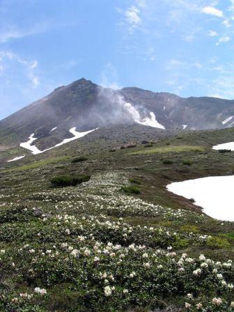 キバナシャクナゲと旭岳(6月).jpg