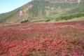 チングルマの紅葉と当麻岳(9月).jpg