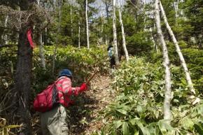 26.5.20然別自然休養林登山道整備