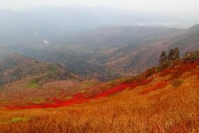 黒岳ナナカマドの紅葉