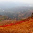ナナカマドのじゅうたん・黒岳9合目付近・161003・岩城AR